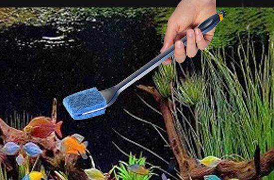 2. Use an algae scraper